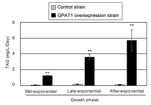 Figure 3. Improved TAG productivity by CmGPAT1 overexpression