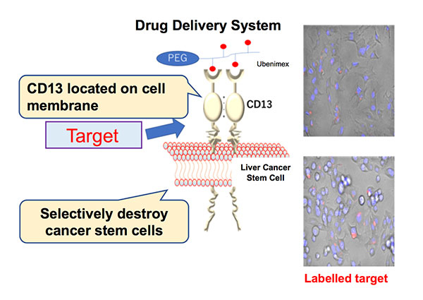 Figure 1. Outline of the drug delivery system (DDS) created in this study ©Osaka University