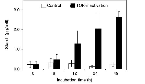 Figure 2. Algal starch accumulation through TOR inactivation