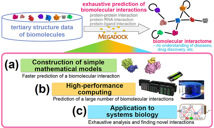 Development of exhaustive biomolecular interaction prediction technology