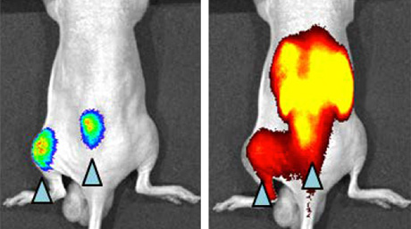 A novel non-invasive imaging probe for fast and sensitive detection of cancer