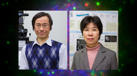 Labs spotlight #15 - Tokunaga and Sogawa Laboratory -