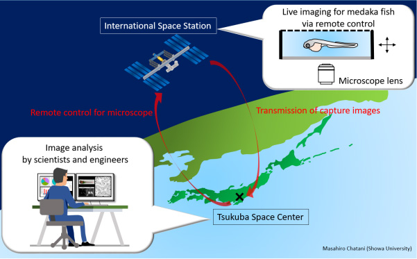 Scheme of live-imaging method under microgravity.