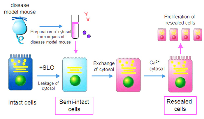 Scheme of cell-resealing technique