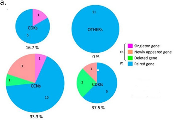 Figure a. Genes involved in the regulation of the cell cycle. The numbers of singleton, new, deleted, and paired genes and percentages of altered genes are indicated in the charts.