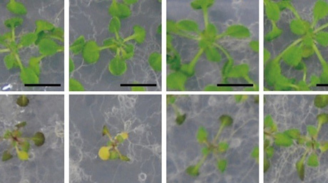 Uncovering essential enzymes for plant growth during nitrogen starvation