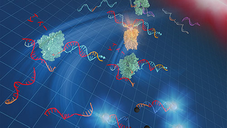 A rapid, easy-to-use DNA amplification method at 37℃