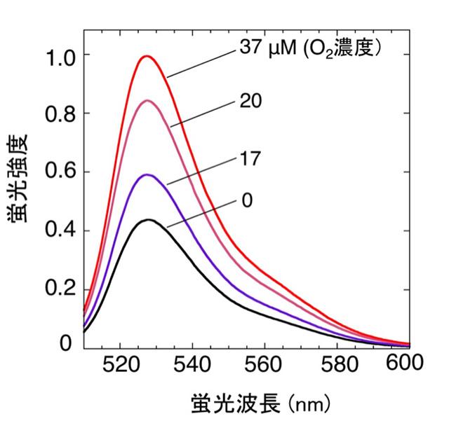 図2. ANAセンサーの酸素濃度に応じた蛍光強度変化