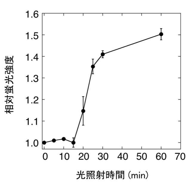 図3. ANAセンサーを利用したシアノバクテリアの光合成による酸素発生のモニタリング