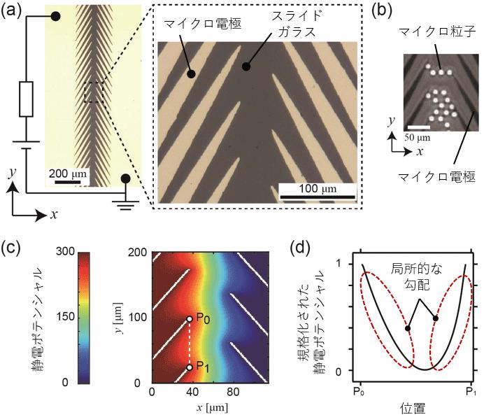 図2. (a)ノコギリ状マイクロ電極。二次元スライドガラス上に金をマイクロパターニングすることで作製された。(b)ノコギリ状マイクロ電極上に分散されたポリスチレンマイクロ粒子。(c)定電圧を印加することによって形成される静電ポテンシャル。(d)P0P1間における静電ポテンシャルのプロファイル。y方向に関して局所的には勾配があるものの、総和をとるとゼロになる。
