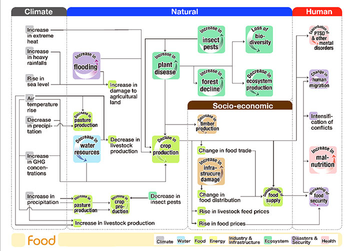 Flowchart of climate risk interconnections related to the food sector