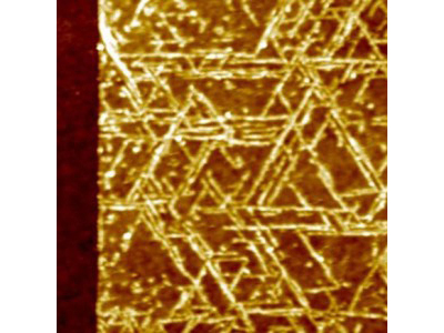 A top view image of GrBP5 nanowires on a 2-D surface of molybdenum disulfide.