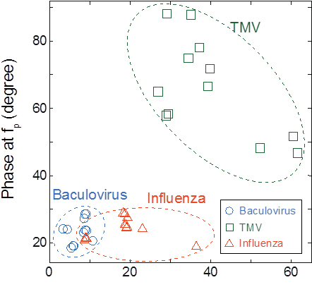 Cluster map of the detected viruses: Baculovirus, TMV, and influenza virus. The data were obtained for virus concentrations of 1011 to 1014 virions/mL